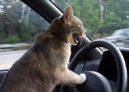 Beep Beep!! I'm healin' here! :D ;)
